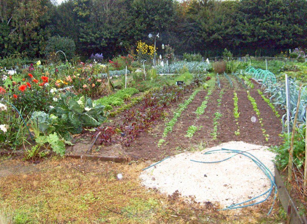 Les jardins familiaux à la Croix St-Lambert