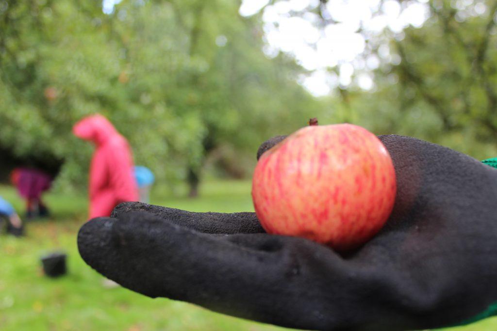 Fête de la Pomme 2021